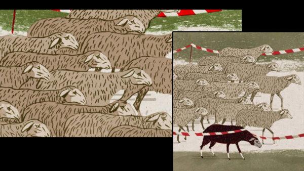 mouton-noir1