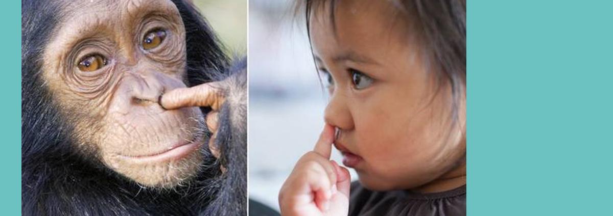 """CONFÉRENCE Histoire des Idées  """"Animal et animaux, suis-je un animal comme un autre?"""""""